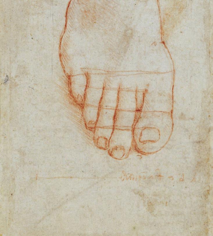 Leonardo da Vinci, Studio di un piede con misure_circa 1490 Windsor_The Royal Collection (web)